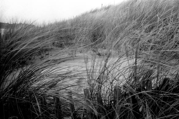 Dunes & Herbes - Contax G2 - Dec 2012
